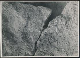 cca 1933 Kinszki Imre (1901-1945) budapesti fotóművész  pecséttel jelzett vintage alkotása (mészkő), 17,5x12,5 cm