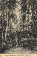 1912 Alváca, Vata de Jos; Gyógyfürdő, fősétány / spa, promenade