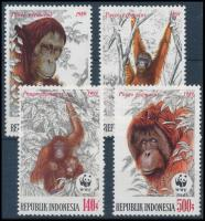 WWF: Orangutan set, WWF: Orángután sor