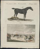 XVIII. sz. színezett lovat és lovaspolót ábrázoló rézmetszet 17x23 cm