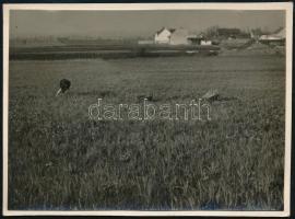 1930 Kinszki Imre (1901-1945) budapesti fotóművész hagyatékából, feliratozott, vintage fotó (Rákos), 6,3x8,5 cm