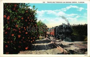 Florida, Traveling through an orange grove, locomotive (Rb)