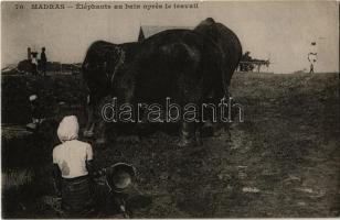 Chennai, Madras; Éléphants au bain apres le travail / elephants bathing after work