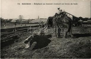 Chennai, Madras; Éléphant au travail (roulant un tronc de teck) / elephant at work, rolling a tree trunk