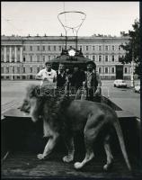 Villamosok Nagyváradon, Budapesten és egy ismeretlen helyszínen, 3 db fotó, 6x8,5 cm és 22x17,5 cm között
