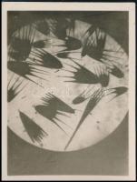 1928 december 8. Kinszki Imre (1901-1945) budapesti fotóművész által feliratozott vintage alkotás (Makrofotó), 8,7x6,5 cm
