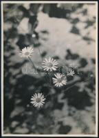 cca 1937 Kinszki Imre (1901-1945) budapesti fotóművész aláírt, pecséttel jelzett vintage fotóművészeti alkotása (Strandblumen), 18x13 cm