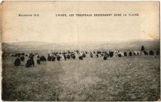 1918 Macédonie, Lhiver, Les troupeaux descendent dans la plaine / Macedonia, winter, herd grazing on the fields (Rb)