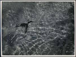 cca 1933 Kinszki Imre (1901-1945) budapesti fotóművész hagyatékából, pecséttel jelzett, vintage fotóművészeti alkotás (Pingvin), 17,4x23,5 cm