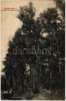 Deliblát, Deliblato; Nyárfás erdő a deliblati homokpusztán / Deliblatska Pescara / poplar forest in the Deliblato Sands