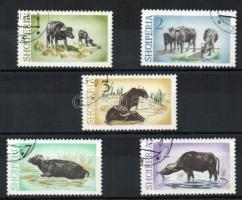 Water buffalo set, Vízibivaly sor