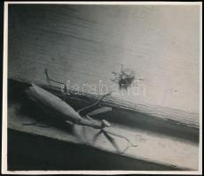 cca 1936 Kinszki Imre (1901-1945) budapesti fotóművész hagyatékából, pecséttel jelzett, vintage fotó (Találkozás az ablakpárkányon), 12,6x14,4 cm