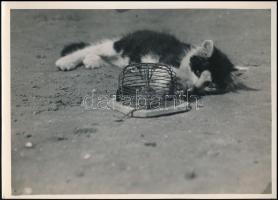 cca 1933 Kinszki Imre (1901-1945) budapesti fotóművész hagyatékából, pecséttel jelzett, vintage fotó (The first experiences), 13x18 cm
