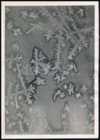 cca 1934 Kinszki Imre (1901-1945) budapesti fotóművész hagyatékából, pecséttel jelzett, vintage fotó (Jégvirágok), 16,9x12 cm