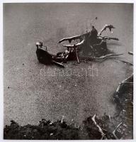 1973 Zinner Erzsébet: Telki rezervátum, hátoldalon feliratozva, 25×24 cm