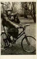 Kerékpározó csimpánzok az állatkertben, Kiadja Budapest székesfőváros állat- és növénykertje / Chimpanzees riding a bicycle, humour, Budapest Zoo