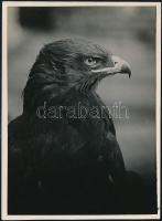 cca 1935 Kinszki Imre (1901-1945) budapesti fotóművész pecséttel jelzett, vintage fotóművészeti alkotása (The Eagle), 17,6x13 cm