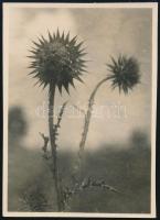 1930 június 9. Kinszki Imre (1901-1945) budapesti fotóművész hagyatékából jelzés nélküli, de a szerző által datált, vintage fotó (Kecskehegy, ez a szerző által számozott 610. felvétele), 8,3x6 cm