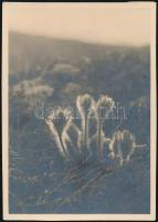 1930 Kinszki Imre (1901-1945) budapesti fotóművész jelzés nélküli, de általa feliratozott, vintage fotója (Mátyáshegy, ez a 468. sz. felvétele), 8,5x6 cm