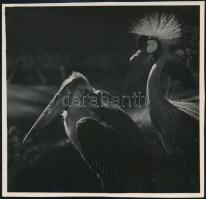 cca 1933 Kinszki Imre (1901-1945) budapesti fotóművész hagyatékából, aláírt és pecséttel jelzett, vintage fotó (Jó barátok), 12,4x12,6 cm