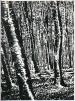 cca 1975 Gebhardt György (1910-1993) budapesti fotóművész hagyatékából, jelzés nélküli vintage fotóművészeti alkotás (Erdő), a magyar fotográfia avantgarde korszakából, 23,7x17,7 cm