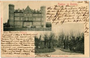 1900 Bzenec, Bisenz; Zámek, 900 let stará lípa / castle, 900 years old lime tree