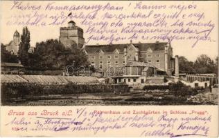 1906 Lajtabruck, Bruck an der Leitha; Palmenhaus und Zuchtgärten im Schloss Prugg / Pálmaház a Prugg kastély kertjében. Alex J. Klein Nr. 578. / palm house in the castle garden