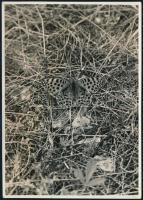 cca 1933 Kinszki Imre (1901-1945) budapesti fotóművész hagyatékából, a szerző által feliratozott, pecséttel jelzett vintage fotó (Latonia pillangó), 17,6x12,5 cm
