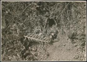 cca 1933 Kinszki Imre (1901-1945) budapesti fotóművész hagyatékából, a szerző által feliratozott, pecséttel jelzett vintage fotó (Csajkó), 17x12,2 cm