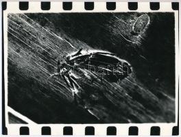 cca 1975 Jelzés nélküli vintage fotó a magyar fotográfia avantgarde korszakából, 18x23,6 cm