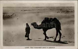 Libia, Due inseparabili amici in cammino / Libyan folklore, camel. Fot. La Commare (EK)