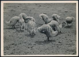 cca 1933 Kinszki Imre (1901-1945) budapesti fotóművész hagyatékából, pecséttel jelzett vintage fotó (Fej nélküliek), 13x18 cm