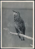 cca 1934 Kinszki Imre (1901-1945) budapesti fotóművész hagyatékából, pecséttel jelzett és a szerző által feliratozott, vintage fotó (Seregély), 17x12 cm