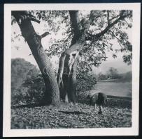 1943 Kinszki Imre (1901-1945) budapesti fotóművész hagyatékából, jelzés nélküli, de a szerző által datált vintage fotó (Kinszki Juditka gesztenyét gyűjt), 6x6 cm