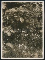 cca 1931 Kinszki Imre (1901-1945) budapesti fotóművész hagyatékából, jelzés nélküli, de a szerző által feliratozott és datált vintage fotó (Hűvösvölgy), 8,4x6,1 cm