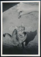 cca 1934 Kinszki Imre (1901-1945) budapesti fotóművész hagyatékából, jelzés nélküli vintage fotó (Cica csali), 8,3x6 cm