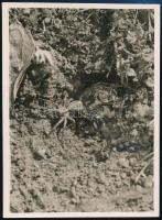 cca 1932 Kinszki Imre (1901-1945) budapesti fotóművész hagyatékából, a szerző által feliratozott, pecséttel jelzett vintage fotó (Pók), 11,5x8,5 cm