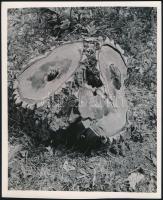 cca 1931 Kinszki Imre (1901-1945) budapesti fotóművész hagyatékából, felirattal jelzett vintage fotóművészeti alkotás (kivágott fa), 22x18 cm