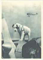 Talisman. Aeroklub republiky Ceskoslovenské. Am. foto Masojidek / Czechoslovak airplane with dog