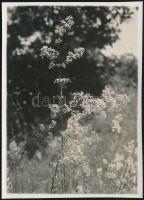 1929 Kinszki Imre (1901-1945) budapesti fotóművész hagyatékából, a szerző által feliratozott vintage fotó (Farkasvölgy, ez a 242. sz. felvétele), 8,3x6 cm