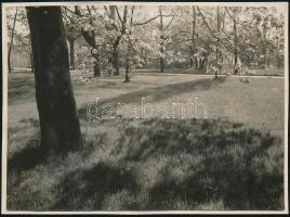 1929 Kinszki Imre (1901-1945) budapesti fotóművész hagyatékából, a szerző által feliratozott vintage fotó (Margitsziget, ez a 164. sz. felvétele), 6,4x8,5 cm