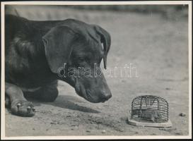 cca 1933 Kinszki Imre (1901-1945) budapesti fotóművész pecséttel jelzett vintage fotóművészeti alkotása (Megfigyelés), 12,7x17,6 cm