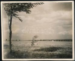 1931 Kinszki Imre (1901-1945) budapesti fotóművész hagyatékából, a szerző által feliratozott vintage fotó (Rákosliget, ez a szerző 956. felvétele), 6x7,5 cm