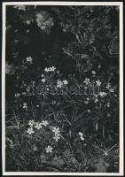 cca 1933 Kinszki Imre (1901-1945) budapesti fotóművész hagyatékából, pecséttel jelzett, vintage fotó (Mezei virágok), 17x11,9 cm