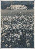 cca 1934 Kinszki Imre (1901-1945) budapesti fotóművész hagyatékából, pecséttel jelzett vintage fotó (Rét), 17,2x12,4 cm