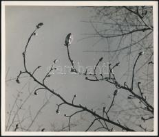 cca 1933 Kinszki Imre (1901-1945) budapesti fotóművész hagyatékából pecséttel jelzett, vintage fotóművészeti alkotás (Tavaszi rügyek), 20,6x18 cm