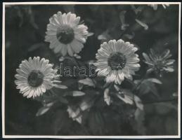 cca 1935 Kinszki Imre (1901-1945) budapesti fotóművész hagyatékából, pecséttel jelzett és a szerző által feliratozott vintage fotó (Őszirózsák), 15x11,4 cm