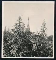 1929 Kinszki Imre (1901-1945) budapesti fotóművész hagyatékából, a szerző által datált vintage fotó (Torony a növények között), 6,4x5,9 cm