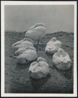 cca 1931 Kinszki Imre (1901-1945) budapesti fotóművész hagyatékából jelzés nélküli vintage fotó (Vízparton), 7,8x6,1 cm