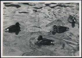 cca 1932 Kinszki Imre (1901-1945) budapesti fotóművész hagyatékából, pecséttel jelzett vintage fotó (Cigányrécék), 12x16,7 cm